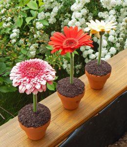 Schoko-Cupcakes mit Oreobröseln im Blumentöpfchen